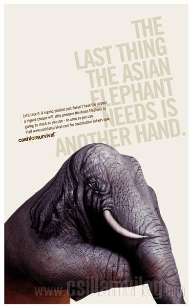 elefante-cash-for-survival