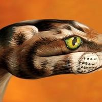 Cat-on-orange1-499x340